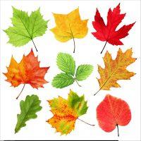 رنگ برگ درختان