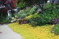 جایگزین چمن در فضای سبز