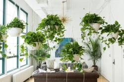 3051171-inline-i-4-homepolish-plant-the-creative-antidote-to-the-open-office