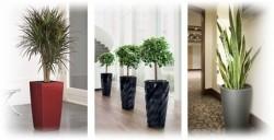 office-plants