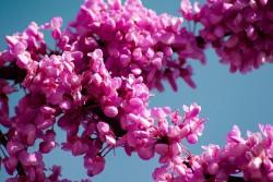 tree-of-judea-724395_960_720
