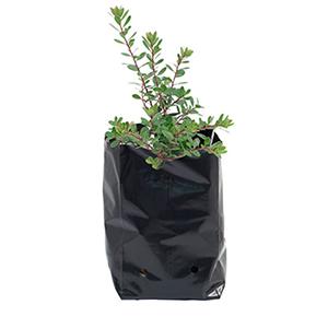 کیسه کاشت گیاه ۶*۱۰ بسته ۱۰ عددی