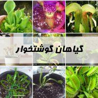 گیاهان گوشتخوار