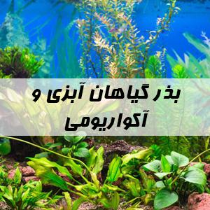 بذر گیاهان آبزی و آکواریومی