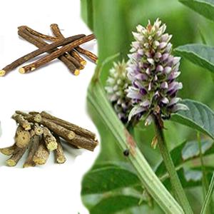 بذر گیاه دارویی شیرین بیان
