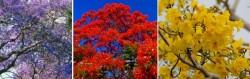 floratrees