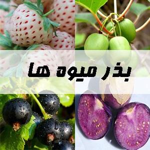 بذر میوه ها