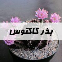 بذر کاکتوس