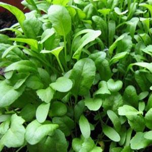 بذر سبزی شاهی