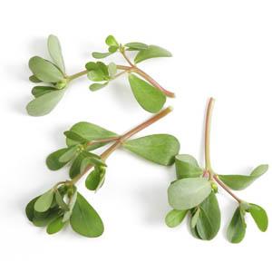 بذر سبزی خرفه