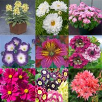 بذر گل و گیاهان خارجی