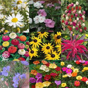 بذر گل و گیاهان ایرانی