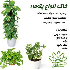 خاک مخصوص گل پتوس ۲ لیتری
