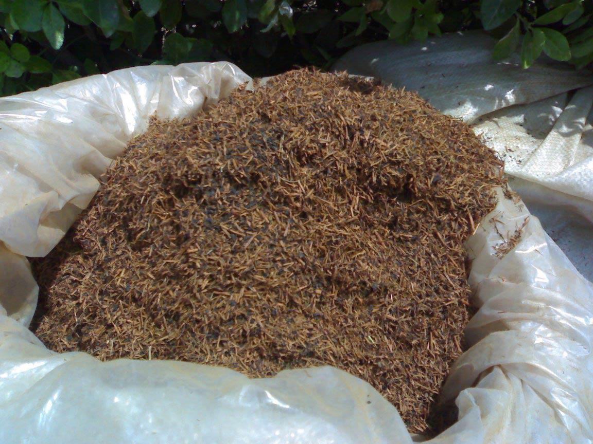 استفاده از تفاله یا ضایعات چای در خاک گلدان