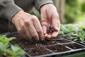 نکاتی مهم در مورد کاشت بذر تابستان