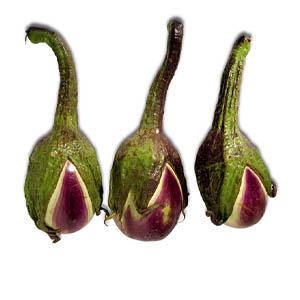 بذر بیبی بادمجان یا بادمجان ترشی