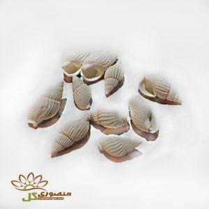 صدف دریایی شیپوری سفید ریز ۱۰ عددی کد s803
