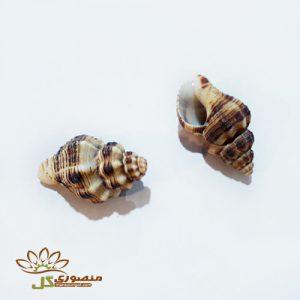 صدف دریایی شیپوری کوچک کدs805