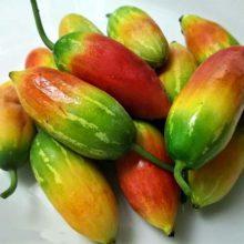 بذر خیار سرخ