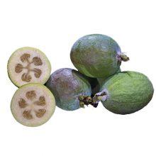 بذر میوه فوجیا گرد زودرس
