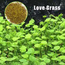 بذر گیاه آکواریومی love grass aquarium