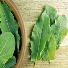 بذر گیاه ترشک ( سبزی ترش تره )