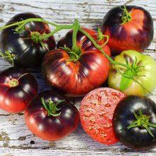 بذر گوجه رقم بلو بیوتی