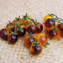 بذر گوجه گیلاسی خوشه ای توت طلایی آبی