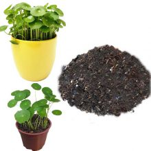 خاک مخصوص گیاه هیدروکوتیل ۲ لیتری