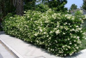 گل و گیاه مناسب برای دیوار کشی