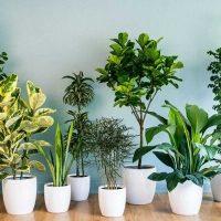 بذر گیاهان آپارتمانی و نیمه آپارتمانی